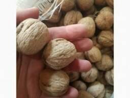 Продам оптом грецкие орехи - фото 2