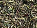 Medicinal herbs - photo 3