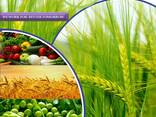 Pesticides manufacturer and supplier worldwide - фото 1
